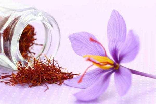 Lưu ý khi sử dụng saffron
