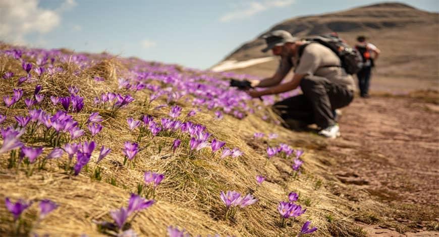 Saffron có hạn sử dụng bao nhiêu