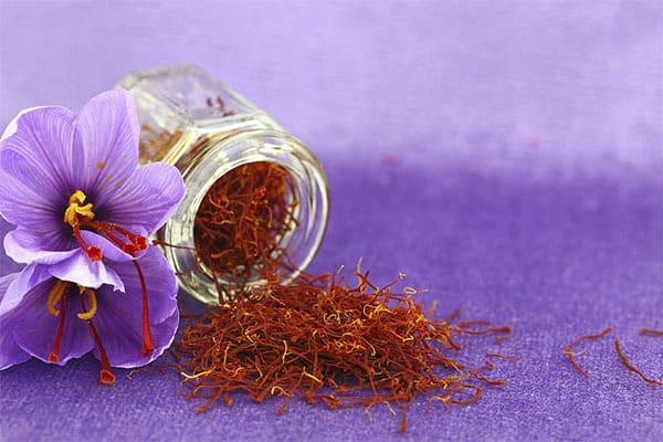 Saffron được sử dụng trong điều trị các bệnh về gan, thận từ rất lâu trước đây
